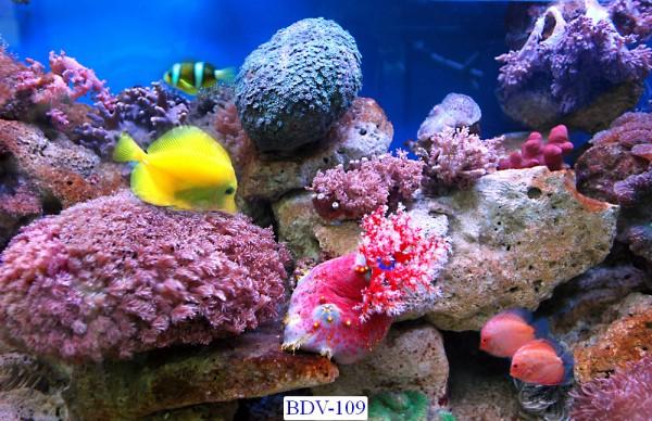 Tranh dán tường Động vật biển Mã BDV – 109