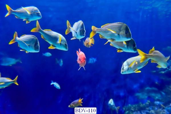 Tranh dán tường Động vật biển Mã BDV – 110