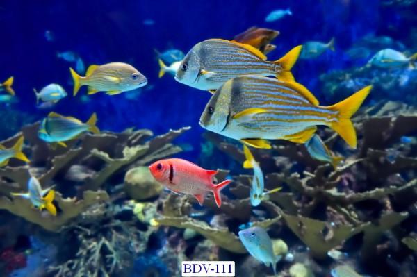 Tranh dán tường Động vật biển Mã BDV – 111