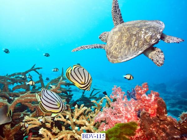 Tranh dán tường Động vật biển Mã BDV – 115